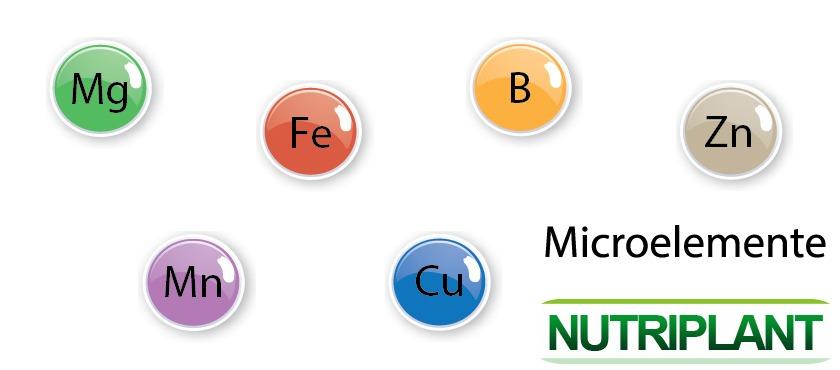 Informatii despre microelemente